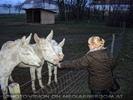 Weiße Esel 13