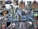 Rendezvouz mit Tier und Mensch