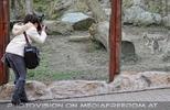 Weiße Tiger Kindergarten 44