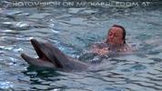 Swim with Dolphins 20