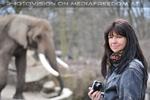 Afrikanische Elefanten 04