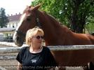 Die Pferdekoppel 3