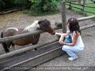 Die Ponys 3