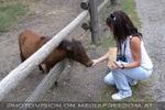 Die Ponys 2