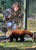 Rote Pandas 28