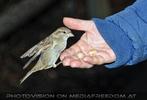 Vögel füttern 04