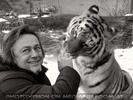Sibirischer Tiger Winter 18