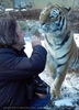 Sibirischer Tiger Winter 19