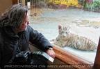 Weiße Tiger 02