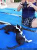 Nissaki Cats 15