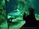 Wasserschildkröte Puppi 3