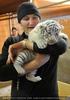 Die weißen Tiger Vierlinge 41