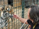 Mit den Tigern 03