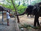 Namuang Jungle Elephant Trip 35