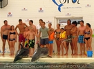 Swim with Dolphins 10