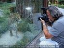 Die Leoparden 3