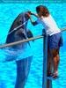 Dolphin Show 10
