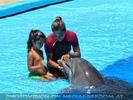 Dolphin Show 12