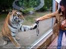 Tiger will Kamera