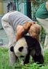 Großer kleiner Panda 4