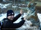 Sibirischer Tiger Winter 24