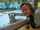 Weißer Tiger Nachwuchs 27