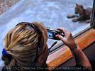 Leoparden Babys 09