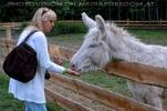 Weiße Esel 2