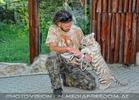 Weißer Tiger Nachwuchs 39