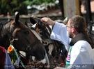 Pferde Segnung in Maria Lankowitz 13