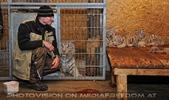 Die weissen Tiger Vierlinge 06 (Rainer Zöchling)