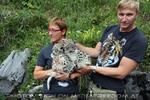 Begrüßung der Schneeleoparden-Zwillinge 05 (Rainer Zöchling)