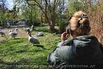Pelikan im Bild