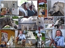 Im Lipizzaner Trainingszentrum