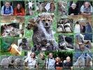 Botschafter für ihre gefährdeten Artgenossen
