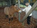 Mit Przewalski-Pferd