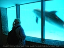 Erster Delfin Kontakt