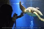 Aquarien 09