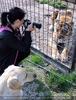 Tiger Rescue 19