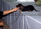 Präsentation 17 - Michis Hund