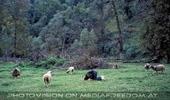 Auf Schaf Niveau