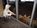 Im Tigerhaus 01