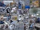 Tiere erlebt und ins Goldschakal Rudel aufgenommen...