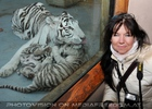 White Tiger Family 49