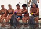 Swim with Dolphins 39