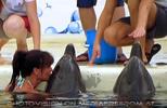 Swim with Dolphins 21