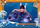 Swim with Dolphins 24