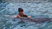 Swim with Dolphins 33