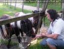 Beim Pony Außengehege