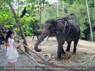 Namuang Jungle Elephant Trip 30